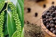 6 tháng đầu năm, xuất khẩu hạt tiêu giảm
