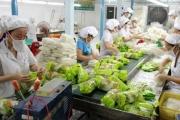 Xuất khẩu rau quả sang Thái Lan tăng cao