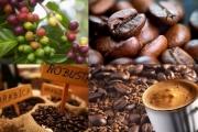 Biểu trưng Nhãn hiệu chứng nhận 'Cà phê Việt Nam chất lượng cao'