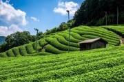 Phú Quốc: Phát triển mô hình nông nghiệp sinh thái gắn với du lịch theo hướng bền vững