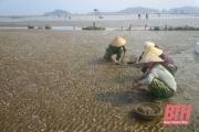 Nỗ lực xây dựng nông thôn mới ở các xã bãi ngang ven biển