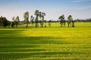 Đồng Tháp: Xây dựng, nâng cao giá trị mặt hàng lúa gạo