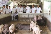Phụ gia: Giải pháp hiệu quả cho chăn nuôi bền vững và phúc lợi động vật