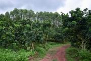 Bỏ vườn vải lâu đời của gia tộc, trồng bưởi kiếm tiền tỷ mỗi năm