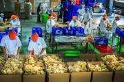 Vốn FDI nâng tầm lớn mạnh vùng đất nông nghiệp