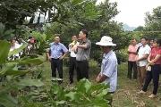 Cần xây dựng thương hiệu mắc ca Việt Nam