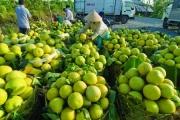 Rộng đường xuất nhập khẩu nhờ Cơ chế một cửa ASEAN