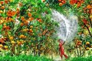 Tiền Giang phát triển thế mạnh nông sản