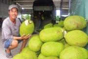 Nhiều loại nông sản, trái cây đồng loạt tăng giá, nông dân mừng khấp khởi