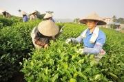 Thái Nguyên phát triển sản phẩm nông nghiệp chủ lực