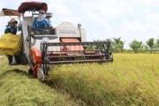 Sóc Trăng: Tăng diện tích lúa đặc sản và bao tiêu cho người trồng
