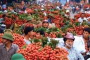 """Xuất khẩu rau quả Việt: Hết cảnh """"ngóng"""" thị trường Trung Quốc"""