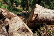 Yên Bái: Thâm nhập điểm nóng phá rừng tại khu bảo tồn loài và sinh cảnh Mù Cang Chải