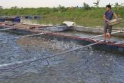 Triển vọng nuôi cá lồng trên sông Cầu