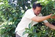 Lão nông khát vọng nâng tầm trái cây Việt
