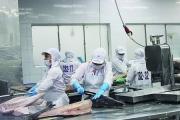 Còn nhiều cơ hội để xuất khẩu cá ngừ sang thị trường Ai Cập