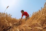 FAO: Dự báo thị trường ngũ cốc toàn cầu vẫn có nguồn cung tốt