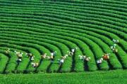 Kinh tế xanh - đòn bẩy cho phát triển bền vững