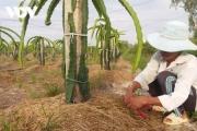 ĐBSCL sớm chủ động phòng chống hạn mặn bảo vệ vườn cây ăn quả
