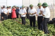 Hội nông dân tỉnh Nghệ An hướng đến mục tiêu: Nông dân giàu có - nông thôn văn minh