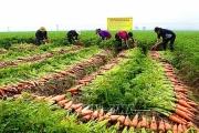 Nông nghiệp các địa phương nỗ lực đạt mục tiêu tăng trưởng