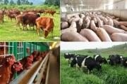 Năm 2025, ngành chăn nuôi sẽ tăng giá trị sản xuất từ 4-5%/năm