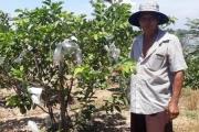 Phát triển kinh tế vườn để tái cơ cấu nông nghiệp, nông thôn nhanh và bền vững