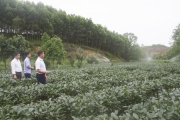 Đã có nhiều mô hình vườn mẫu ở Thái Nguyên