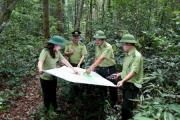 Bình Định: Triển khai xây dựng phương án quản lý rừng bền vững