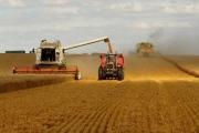 FAO: Dự báo sản lượng ngũ cốc vẫn đạt mức cao nhất mọi thời đại