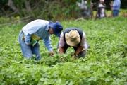 WB kêu gọi Mỹ Latinh thúc đẩy 'tăng trưởng xanh' trong nông nghiệp