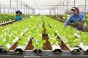 Hỗ trợ Hà Tĩnh, Quảng Bình khôi phục sản xuất nông nghiệp sau bão lũ