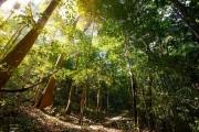 Đại biểu Quốc hội: Chỉ có rừng tự nhiên mới có năng lực bảo vệ đất đai
