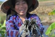 Tôm Việt Nam tiếp tục dẫn đầu thị phần tại Canada