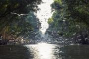 Đồng Tháp: Quy hoạch Vườn quốc gia Tràm Chim thành khu du lịch trọng điểm quốc gia