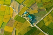 Gạo đặc sản BahNar được bảo hộ chỉ dẫn địa lý 'Mang Yang'