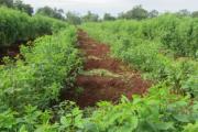Nông nghiệp thông minh cần cách tiếp cận thông minh