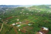 Xẻ đồi phân lô tràn lan ở Lâm Đồng: Hệ luỵ địa phương và khách hàng phải 'gánh'