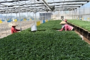 Ứng dụng công nghệ cao trong nông nghiệp