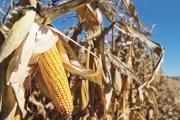 EU có quy định mới cho các nhà xuất khẩu ngũ cốc, đậu và hạt có dầu