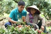 Nông dân dùng smartphone tính toán lượng nước, lượng đạm, điều khiển chăm bón