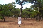 Ngắm rừng thông Đak Đoa ngày đầu năm