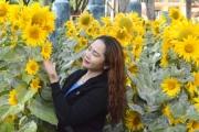 Đẹp ngất ngây vườn hoa hướng dương ở Sư đoàn 320
