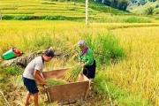 """Sản phẩm gạo Séng Cù được bảo hộ Chỉ dẫn địa lý """"Mường Khương – Bát Xát"""""""