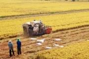 Nâng tầm giá trị hạt gạo Việt Nam trên thị trường quốc tế