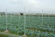 Hải Dương xây dựng vùng sản xuất nông nghiệp phục vụ chế biến xuất khẩu