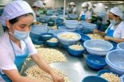 Năm 2020, xuất khẩu hạt điều ước đạt 511 nghìn tấn