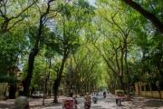 Nhiều địa phương phát động 'Tết trồng cây' và Chương trình trồng mới 1 tỉ cây xanh