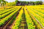 Làng hoa Sa Đéc phát triển du lịch sinh thái