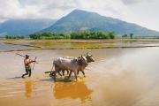 Nông nghiệp đồng bằng sông Cửu Long: Một trụ đỡ của nền kinh tế